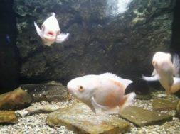 Foto acquario di Siracusa