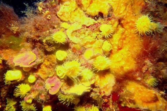 I colori della Secca- Plemmirio (Ph. Vincenzo Carrubba)