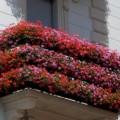 Ortigia in fiore (Ph. tratta da www.tempieterre.it)