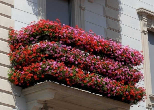 Ortigia in fiore una tradizione che si conferma