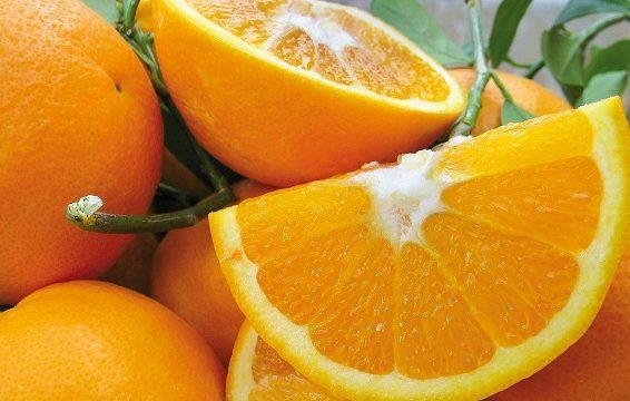Oscar della Frutta ( ph. tratta dal web)